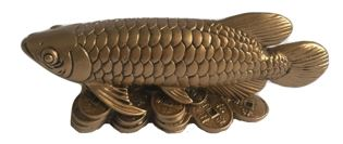 Arowana Money Fish